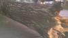 Vântul a făcut ravagii şi în Capitală: Peste 30 de arbori au fost doborâţi