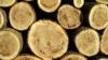 UE interzice comerţul cu lemn obţinut ilegal pe teritoriul său