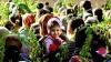 Creştinii ortodocşi sărbătoresc, astăzi, Floriile. De ce se sfinţesc ramurile de salcie aduse de credincioşi la Biserică