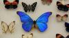 Cea mai mare colecţie de fluturi din lume VIDEO