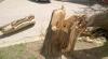 MARTOR OCULAR Un copac înalt de câţiva metri s-a rupt în două şi s-a prăbuşit peste mai multe maşini