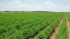 40 la sută din terenurile agricole din ţară nu sunt protejate împotriva grindinei