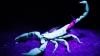 Preziceri astrale: Nativii din Scorpion ar putea pierde în afaceri