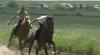 (VIDEO) Eveniment special în Găgăuzia. Curse de cai la Ceadâr Lunga, pentru Premiul başcanului