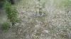 Prăpăd după ploaia din noaptea trecută: Peste 20 de localităţi au fost afectate de grindină