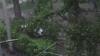 Ploaia şi vântul fac ravagii în Chişinău. Zeci de crengi au căzut la pământ şi peste maşini VIDEO