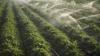 Sisteme noi de irigare pentru o mie de fermieri din ţară, finanţate de americani