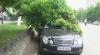 Martor ocular: O creangă de arţar a căzut pe plafonul unui Mercedes, parcat pe bulevardul Moscovei