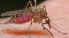 #LifeStyle. Remedii simple împotriva muştelor şi ţânţarilor (VIDEO)