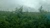 Culturi agricole compromise şi beciuri inundate în mai multe localităţi, după ploaia de ieri
