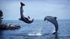 STUDIU: Delfinii formează prietenii de durată, însă evită alte grupuri de semeni