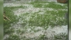 Ploaia cu gheaţă a făcut ravagii în ţară: Peste o mie de hectare de semănături au fost afectate