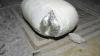 (FOTO) Celulele deţinuţilor, luate la puricat de gardieni. IATĂ ce au găsit oamenii legii în mai multe ascunzişuri