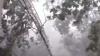 Vremea extremă face victime. O tânără a murit strivită de un copac