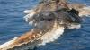 Creatură bizară, găsită în Golful Persic DETALII