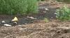 Localnicii din Bucovăţ, nevoiţi să suporte mirosul insuportabil de la o fermă de găini