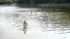 A mers la scăldat şi nu s-a mai întors. Un băieţel de 4 ani s-a înecat în iazul din localitate