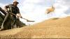 Recolta din acest an la grâu este cea mai bună din ultimii 10 ani, spune ministrul Agriculturii, Vasile Bumacov