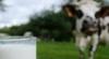 Mii de tone de produse lactate, care conţin o bacterie ce poate fi FATALĂ pentru bebeluşi, retrase de pe piaţă