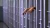Asasinul fetei din Hânceşti, strangulată cu un cordon, condamnat la 25 de ani de închisoare