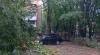 Un copac a căzut peste o maşină în sectorul Râşcani al capitalei (FOTO)