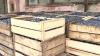 Prunele din Vărzăreşti, în supermarketuri din străinătate. Primarul promite un festival în susţinerea producătorilor