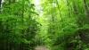 Circa 12 mii de hectare de terenuri erodate vor fi împădurite în următorii cinci ani