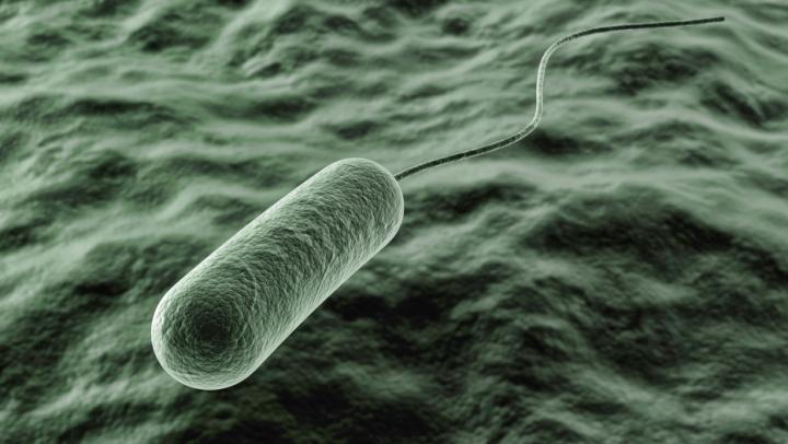 Bine de știut! Cum se transmite bacteria care produce cancer de stomac. Medicii, avertisment teribil
