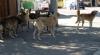Un micuţ de patru ani a fost sfâşiat de câinii vagabonzi
