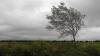 Atenţie! Meteorologii au emis Cod Galben de intensificări ale vântului