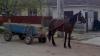 10 accidente rutiere au avut loc în ultimele 24 de ore! Un bărbat a murit pe loc, fiind lovit de un cal