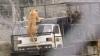 Senzaţii tari la o grădină zoologică: Animalele sunt în libertate, iar vizitatorii - în cuşcă (VIDEO)