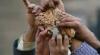 Țara în care oamenii primesc de la stat doar 300 de grame de mâncare pe zi