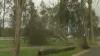 (VIDEO) Furtuna care a lovit vestul şi nordul Europei a lăsat în urmă 15 morţi, copaci doborâţi şi case fără lumină