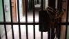 27 de interlopi moldoveni, condamnaţi în Belgia la ani grei de închisoare