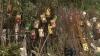 Plante exotice şi arbori aduşi în premieră în Moldova, la expoziţia Moldagrotech de la MoldExpo (VIDEO)