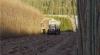 Afacere cu salcie ENERGETICĂ. Prima plantaţie din Moldova fost înfiinţată la Bozieni