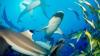STUDIU: Rechinii, sub ameninţarea pescuitului comercial