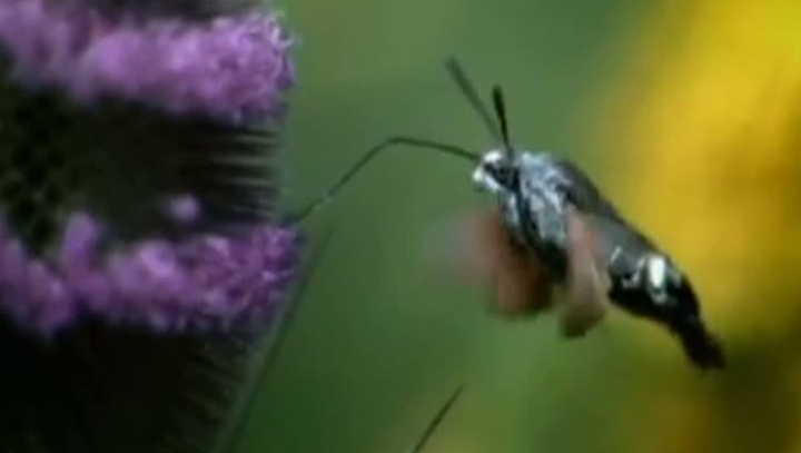 STUDIU: Declinul insectelor poate duce la un colaps catastrofal al ecosistemelor naturale