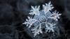 Poze care ÎŢI TAIE RESPIRAŢIA! Cât de feeric arată fulgii de zăpadă surprinşi în imagini unice