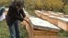 Afacerea de invidiat a unui apicultor, din Şoldăneşti. În patru minute strânge un bac cu miere (VIDEO)