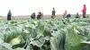 Veste bună pentru agricultorii din Sângerei. Va fi construit un parc agroindustrial, pe o suprafaţă de 12 hectare