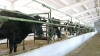 Agenţia pentru Siguranţa Alimentelor: Vaccinarea de toamnă a animalelor este compromisă