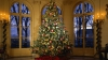 Atenţie, pomul de Crăciun poate fi periculos! Ce boli poate provoca şi ce spun medicii