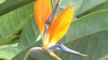 În plină iarnă, una dintre cele mai impresionante plante tropicale a înflorit la Grădina Botanică VIDEO