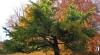 Horoscop arboricol: Ce copac te reprezintă, în funcţie de data naşterii
