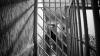 Un inspector de patrulare riscă 10 ani de închisoare. Ce abuz a comis funcţionarul