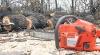 Autorităţile au decis cum vor proteja pădurile împotriva hoţilor de lemn