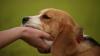 Studiu: Inteligenţa câinilor este supraevaluată în comparaţie cu cea a altor animale