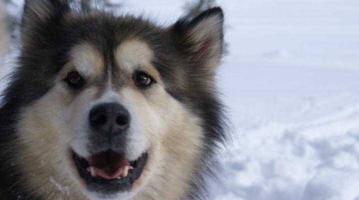 Povestea uimitoare a câinelui care a trăit 11.000 de ani